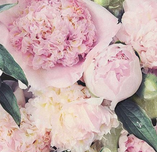 The Perfect Peony