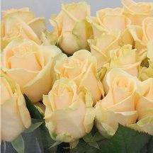 Rose Peach Avalanche