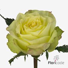 Rose Fairway