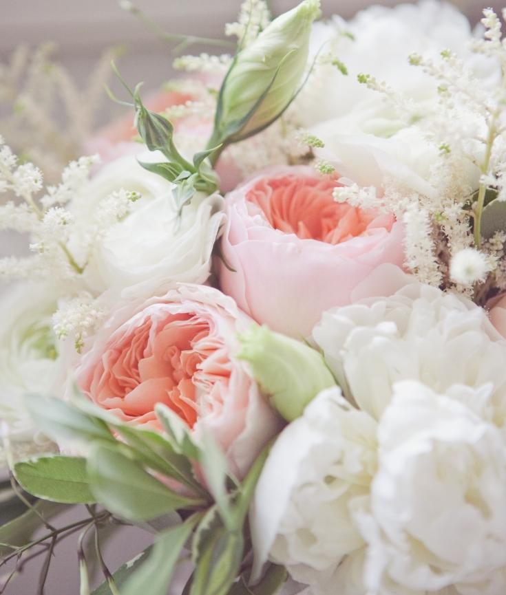 peonies vs garden roses