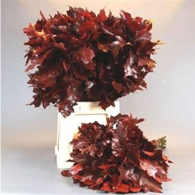 oak-leaves-dyed-red-wholesale-1