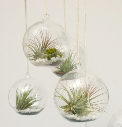 airplants-3
