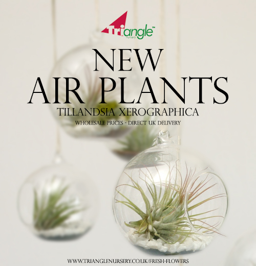 Airplants Ad.jpg