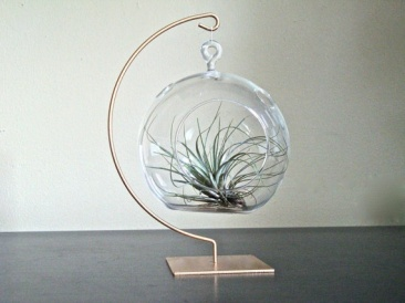 loving-air-plants-15