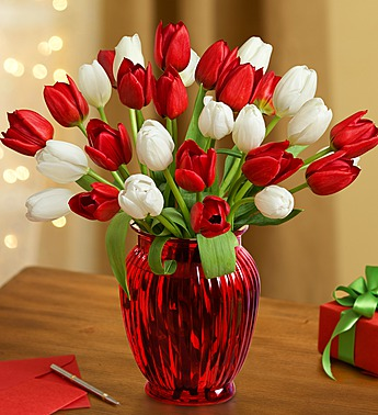 red-and-white-tulips-3
