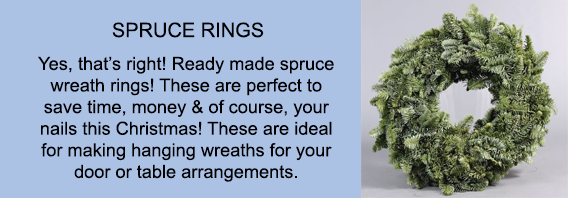 spruce-rings