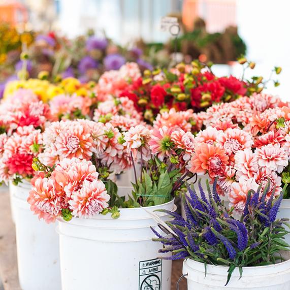 Wholesale Fresh Cut Flowers at Triangle Nursery Ltd