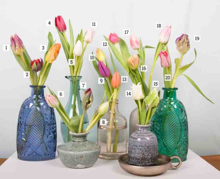 top_20_favourite_tulips.jpg