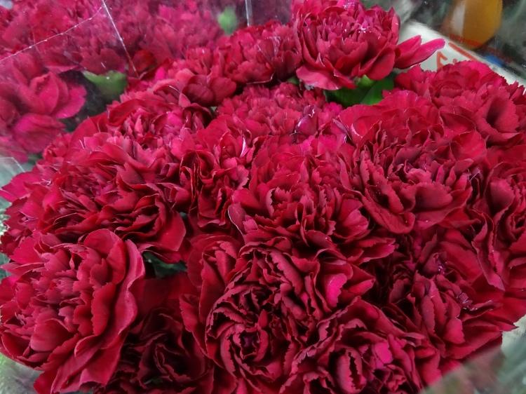 Carnation Crimson Tempo