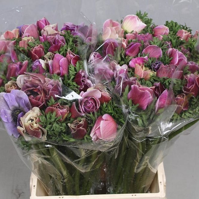 Discover New Blooms to Market!