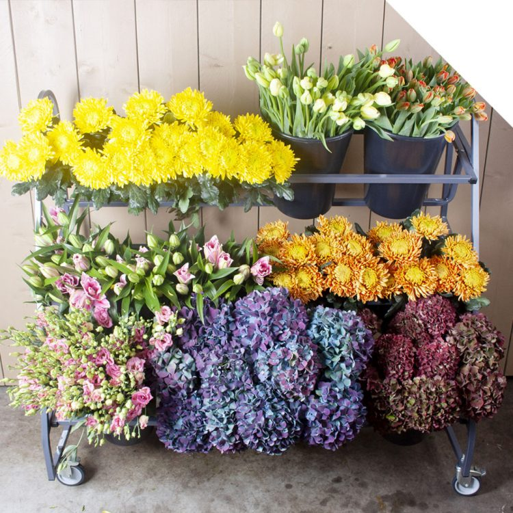 Seasonal Mix Flower Varieties