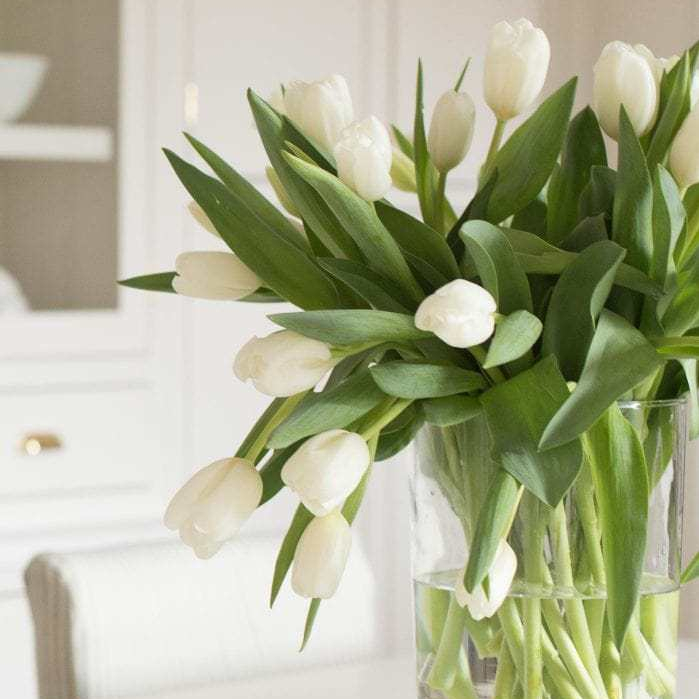 Top 20 Tulips - Triangle Nursery Ltd